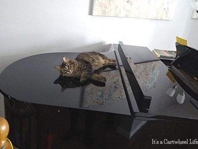cat on grand piano