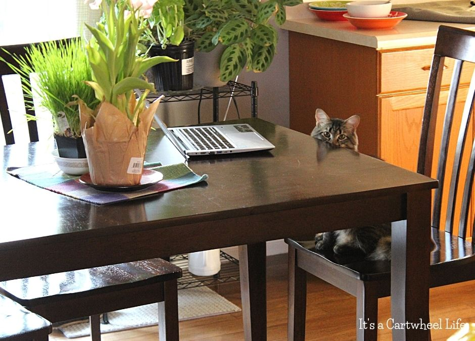 cat hiding behind table
