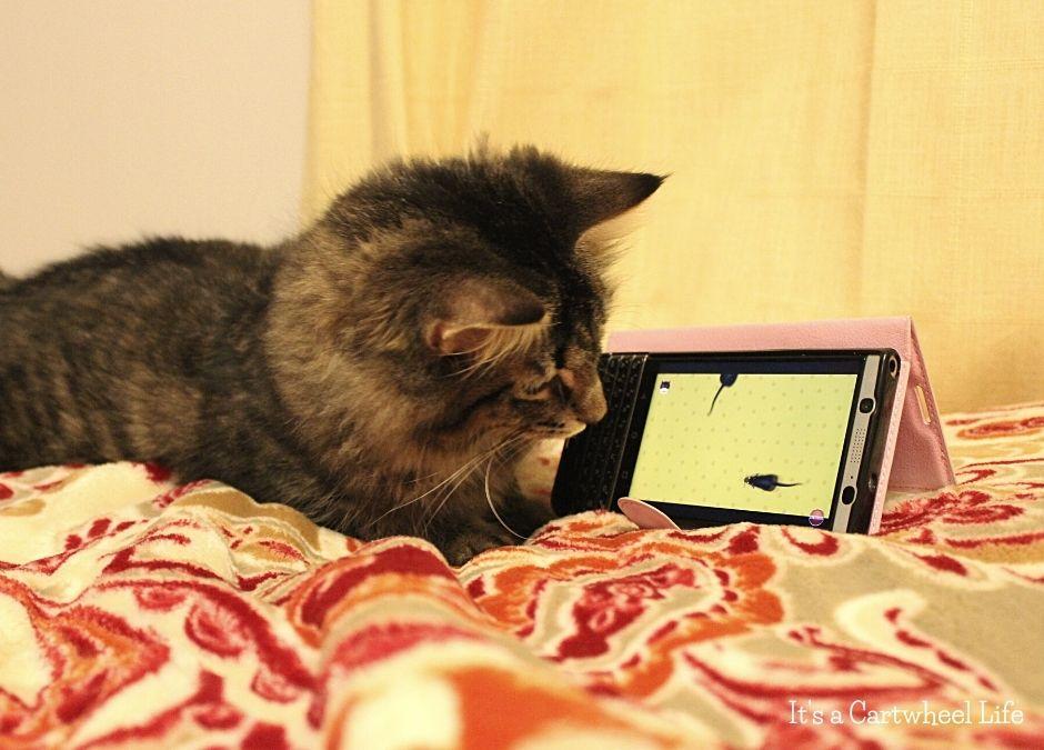 cat watching youtube