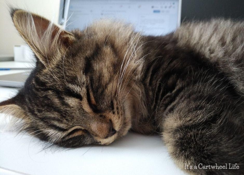 kitten sleeping on desk
