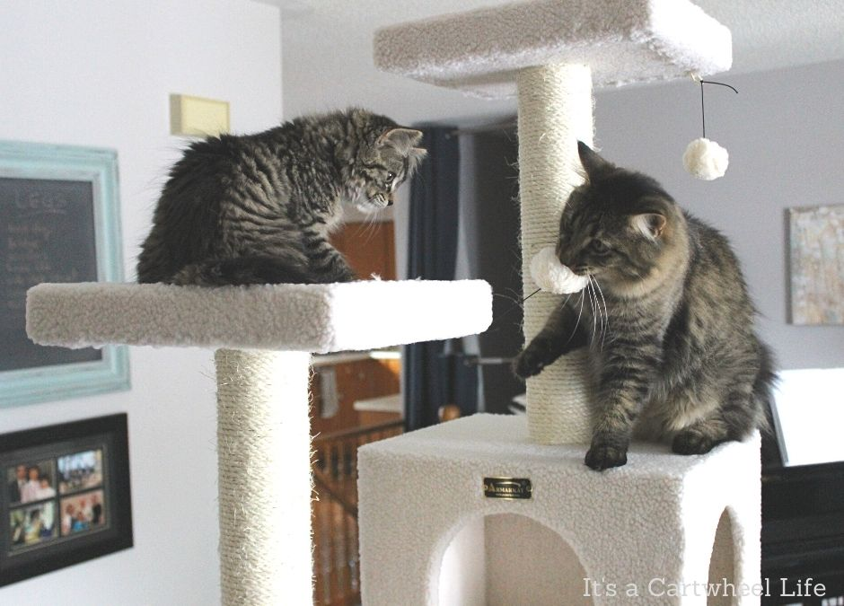 cats playing on cat tree