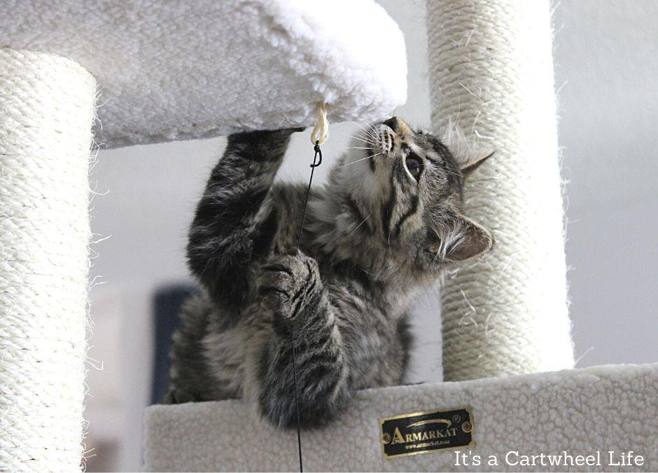 kitten playing on cat tree