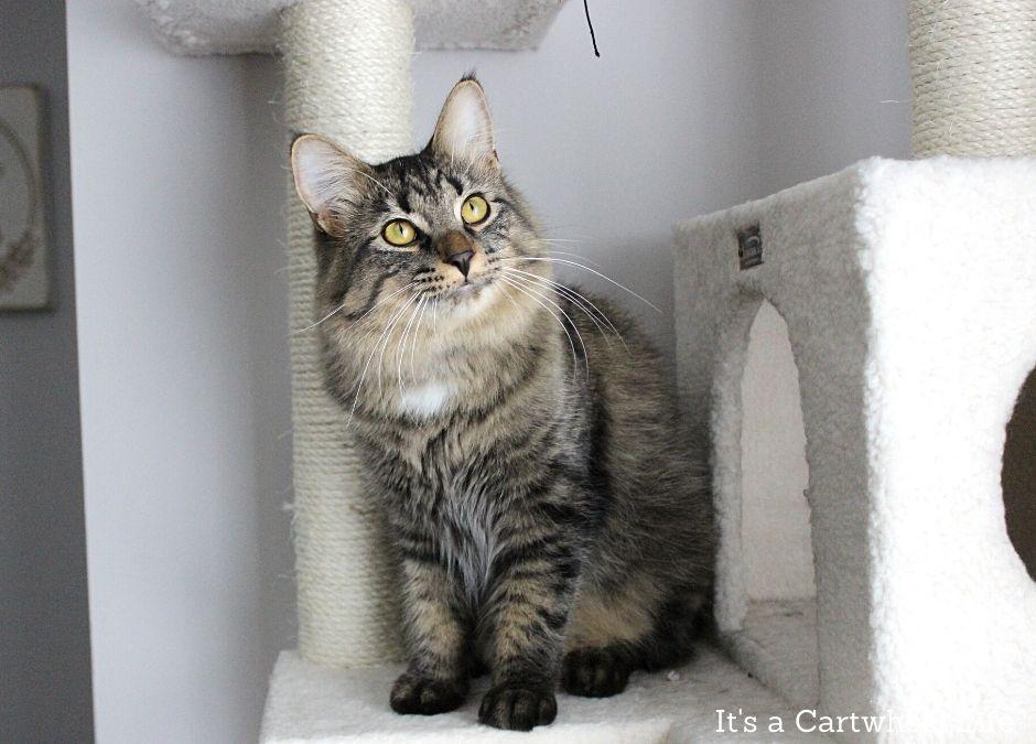 cat sitting on cat tree