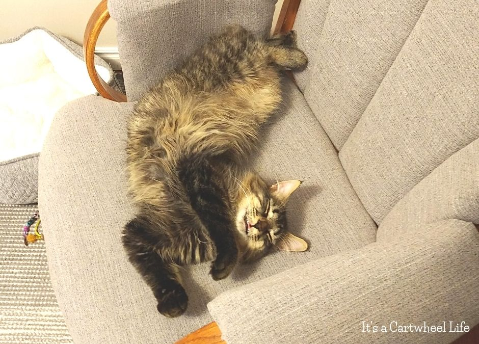 cat sleeping twisted on rocking chair