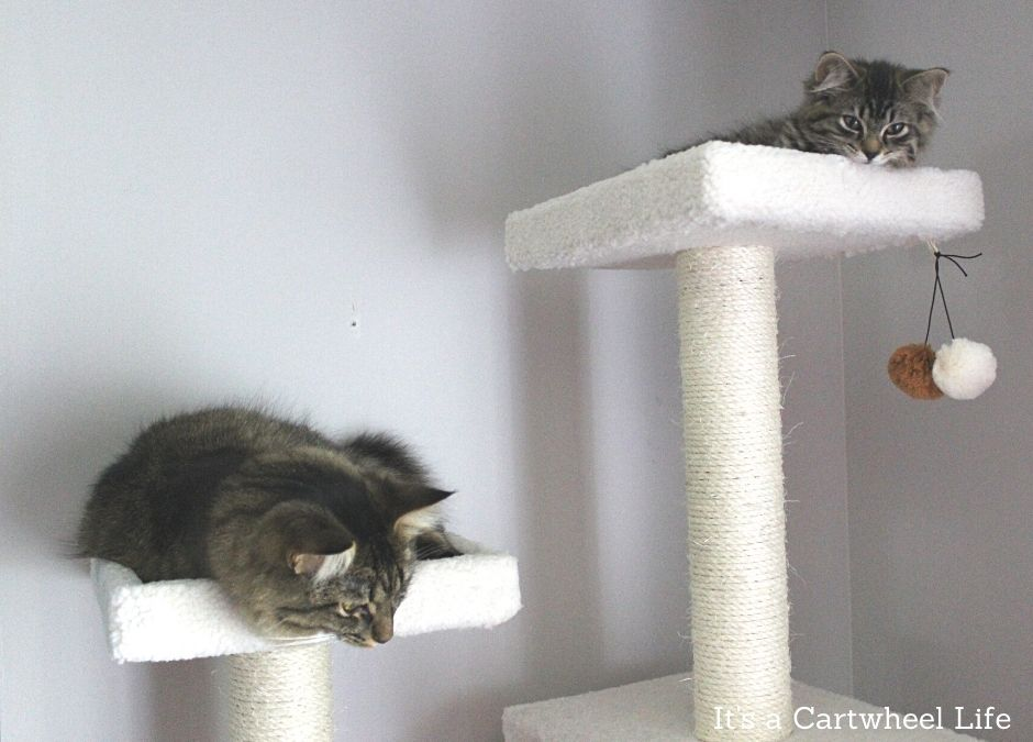 cats sleeping on cat tree
