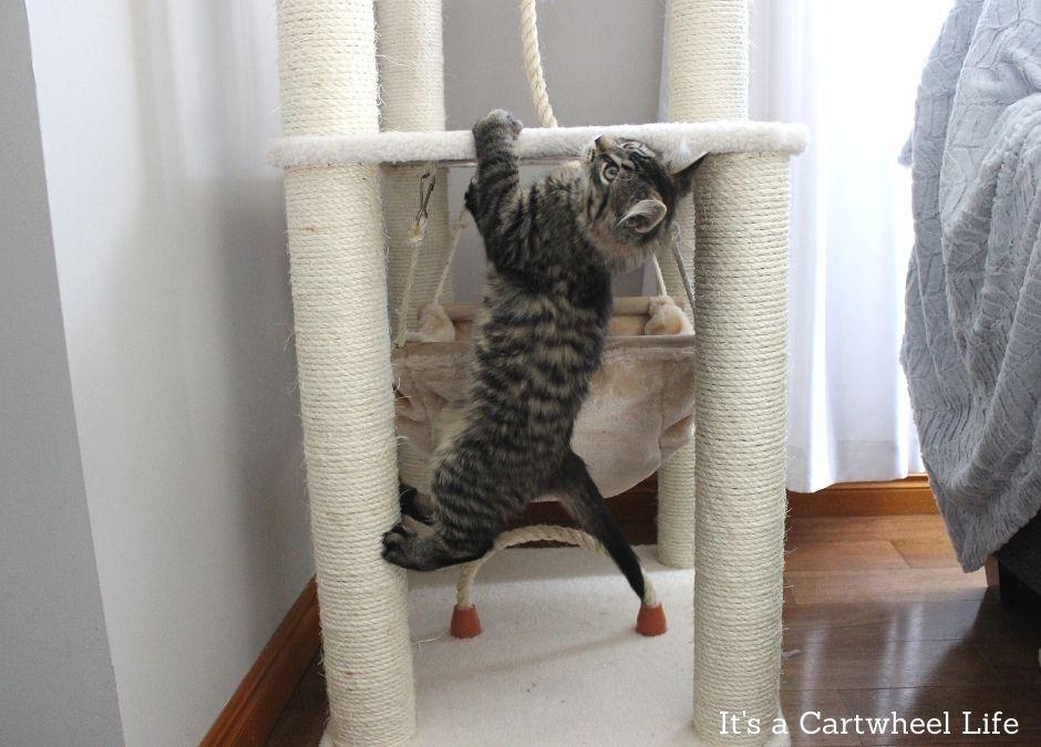 kitten climbing bottom of cat tree