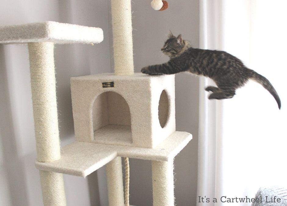 kitten taking a flying leap onto cat tree