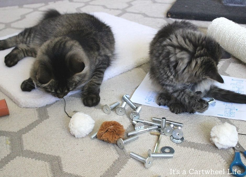 cats playing with cat tree parts