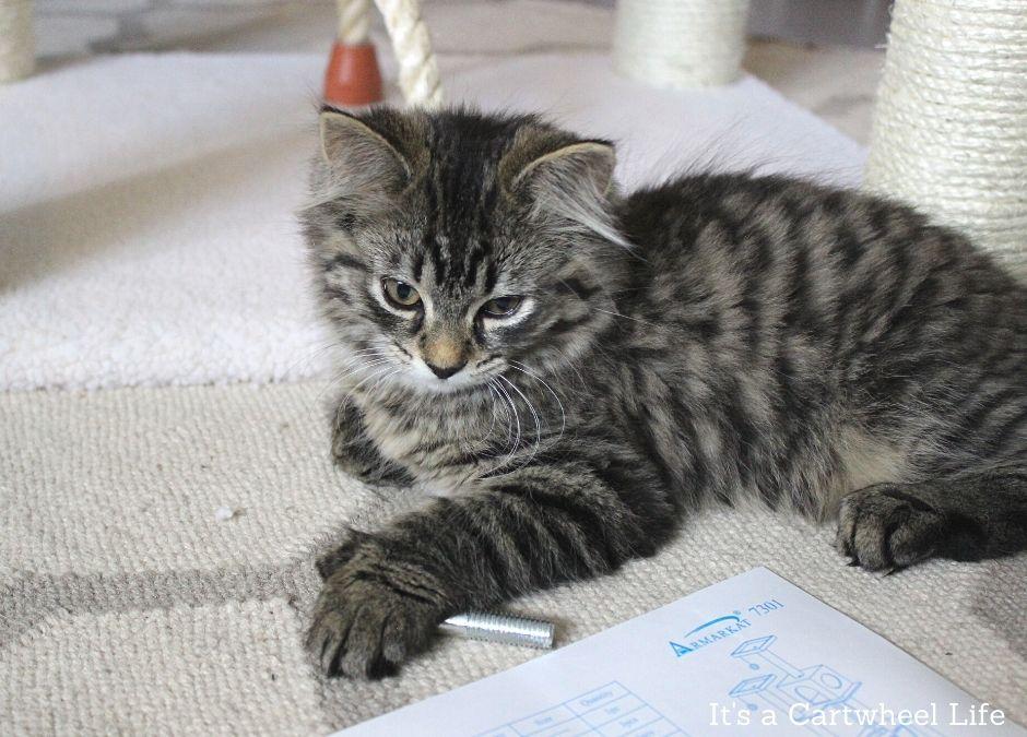 kitten holding screw